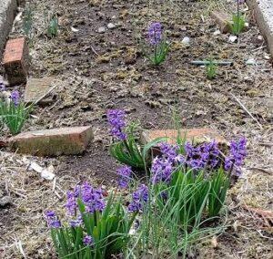 栃木の春の兆し